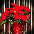 Christmas Red Poinsettia by Cynthia48