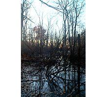 Wooden Marsh Photographic Print