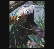 Red Panda large pic. by Virginia McGowan