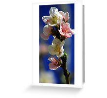 Sweet nectarine Greeting Card