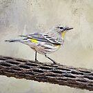 Yellow-throated Vireo by Barbara Manis