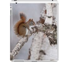 Red Squirrel on Birch Tree iPad Case/Skin