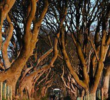 Dark Hedges Overbearing by Wrayzo