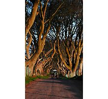 Dark Hedges Overbearing Photographic Print