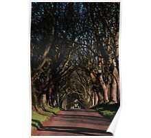 Dark Hedges Canopy Poster