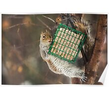 A Squirrel and Her Suet Poster
