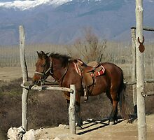 Horse Passion by photozoom