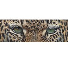 Through The Eyes of A Leopard Photographic Print