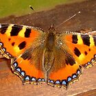 Butterfly by Eugenio