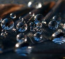 Liquid Luster by Jenni77