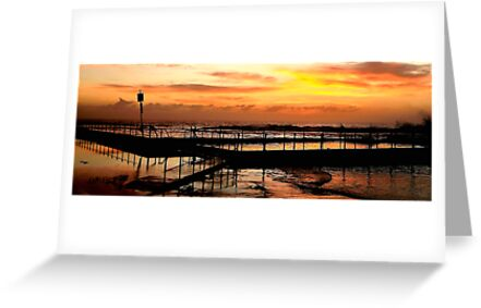 Bathing In The Light - Mona Vale Beach, Sydney Australia by Philip Johnson