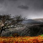 Dartmoor Tree, Devon  by Caroline Bland