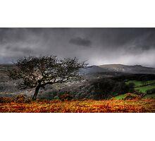 Dartmoor Tree, Devon  Photographic Print