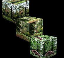 woodland  by cynthiab