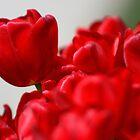 Tres Rouge by zenmatt