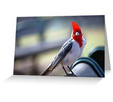 Crested Cardinal 1 Greeting Card