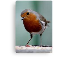 WHEN THE RED ROBIN COMES BOBBIN' ALONG (written by Harry Woods ) Canvas Print