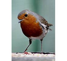WHEN THE RED ROBIN COMES BOBBIN' ALONG (written by Harry Woods ) Photographic Print
