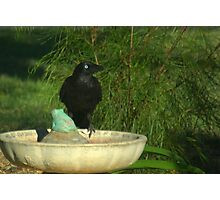 Crow on a bath Photographic Print