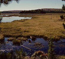 Hailstorm Creek Marsh by bertspix