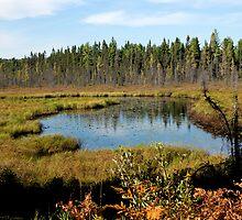 Beaver Dam Creek by bertspix