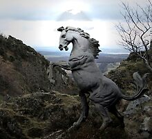 A Wild Stallion by Alan Findlater