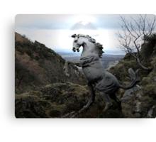 A Wild Stallion Canvas Print