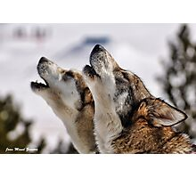 howling Photographic Print