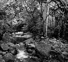 Minnamurra Rainforest by Dulcie