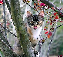 playful kitty in tree by tomcat2170