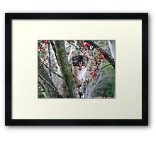 playful kitty in tree Framed Print