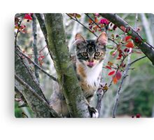 playful kitty in tree Canvas Print