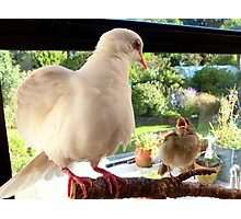 Feed YOU? ... You Must Be Joking! - Dove & Sparrow - NZ Photographic Print