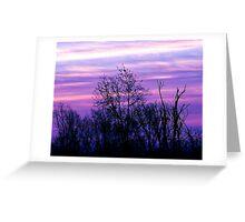 Purple Morning  Greeting Card