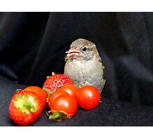 Yum... Rescued Sparrow - NZ Photographic Print
