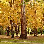 Autumn Foliage Splendor - NZ by AndreaEL