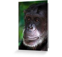 Old Chimp Greeting Card