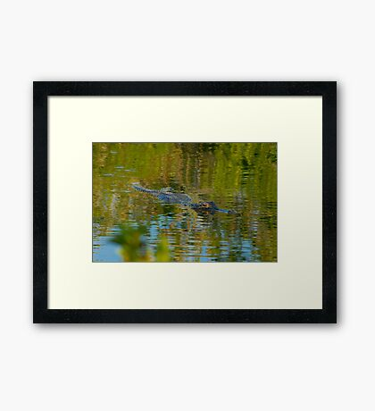 """Cruising the Glades"" Framed Print"