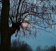 Overcast Evening Sun by RLHall