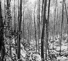 """Pecos Wilderness"" by David Lee Thompson"