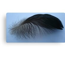 Muscovy feather Canvas Print