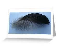 Muscovy feather Greeting Card
