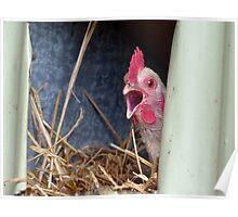 Aahh!!! It's A Huge Egg - Hen - NZ Poster