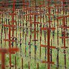 Empty Vines by Michael D'Andrea Diaz
