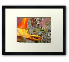 I Gave Up The Teat - Silver-Eye - NZ Framed Print