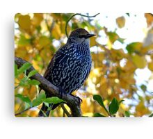 I Stand Out In Autumn Colours - Starling - NZ Canvas Print