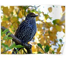 I Stand Out In Autumn Colours - Starling - NZ Poster