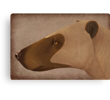 Hyaenodon sp. Canvas Print