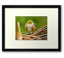 Brrrr.. So Glad I Wore My Fluffy Coat - Silver-Eye - NZ Framed Print
