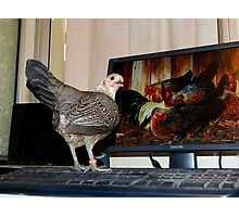 This Is Family Skype Time - Silver-Duckwing - NZ Photographic Print